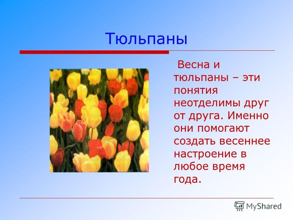 Тюльпаны Весна и тюльпаны – эти понятия неотделимы друг от друга. Именно они помогают создать весеннее настроение в любое время года.