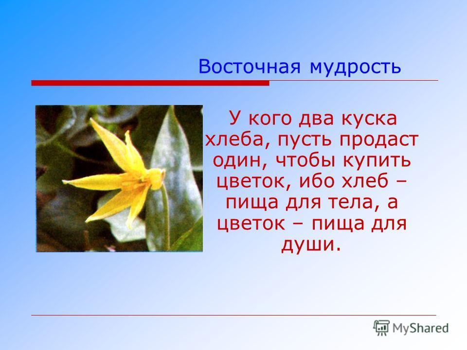Восточная мудрость У кого два куска хлеба, пусть продаст один, чтобы купить цветок, ибо хлеб – пища для тела, а цветок – пища для души.