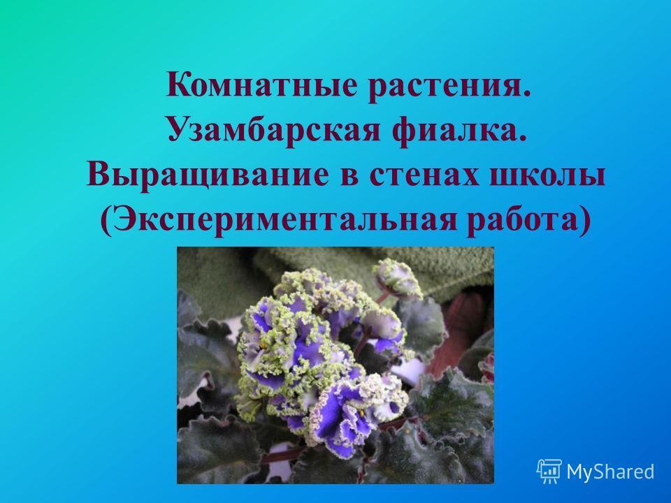 Комнатные растения. Узамбарская фиалка. Выращивание в стенах школы (Экспериментальная работа)