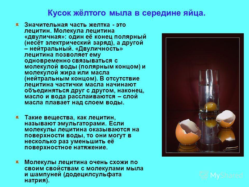 Кусок жёлтого мыла в середине яйца. Значительная часть желтка - это лецитин. Молекула лецитина «двуличная»: один её конец полярный (несёт электрический заряд), а другой – нейтральный. «Двуличность» лецитина позволяет ему одновременно связываться с мо