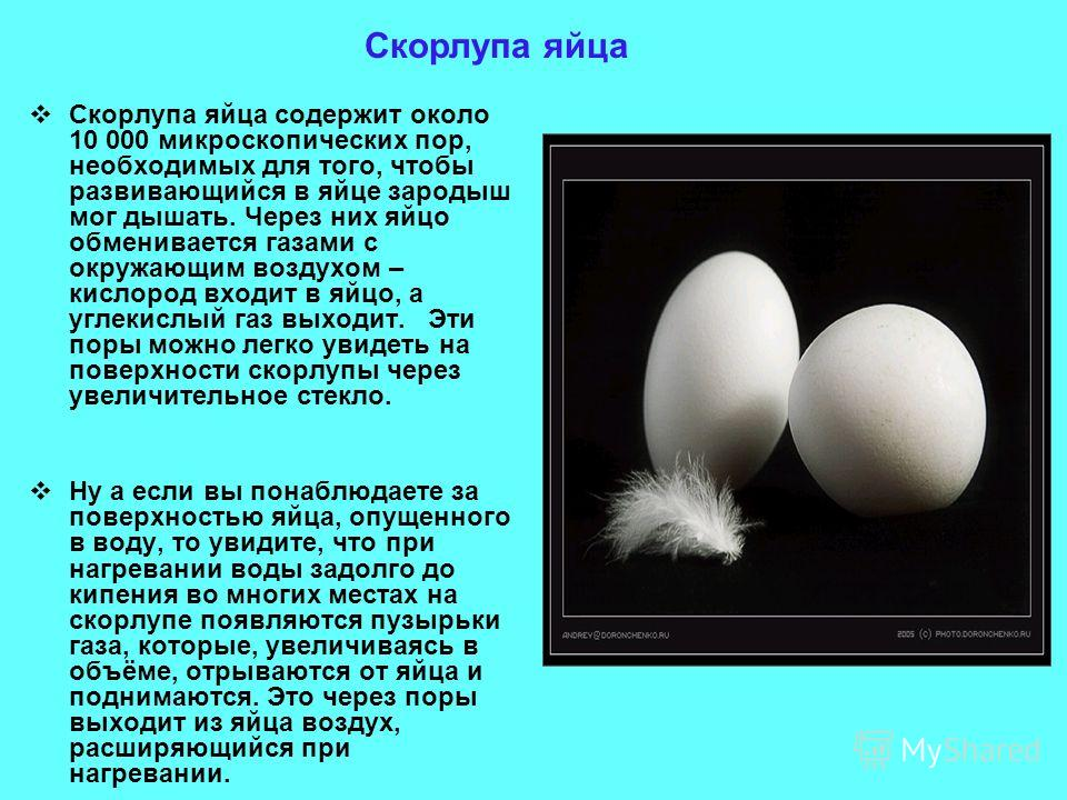Скорлупа яйца содержит около 10 000 микроскопических пор, необходимых для того, чтобы развивающийся в яйце зародыш мог дышать. Через них яйцо обменивается газами с окружающим воздухом – кислород входит в яйцо, а углекислый газ выходит. Эти поры можно