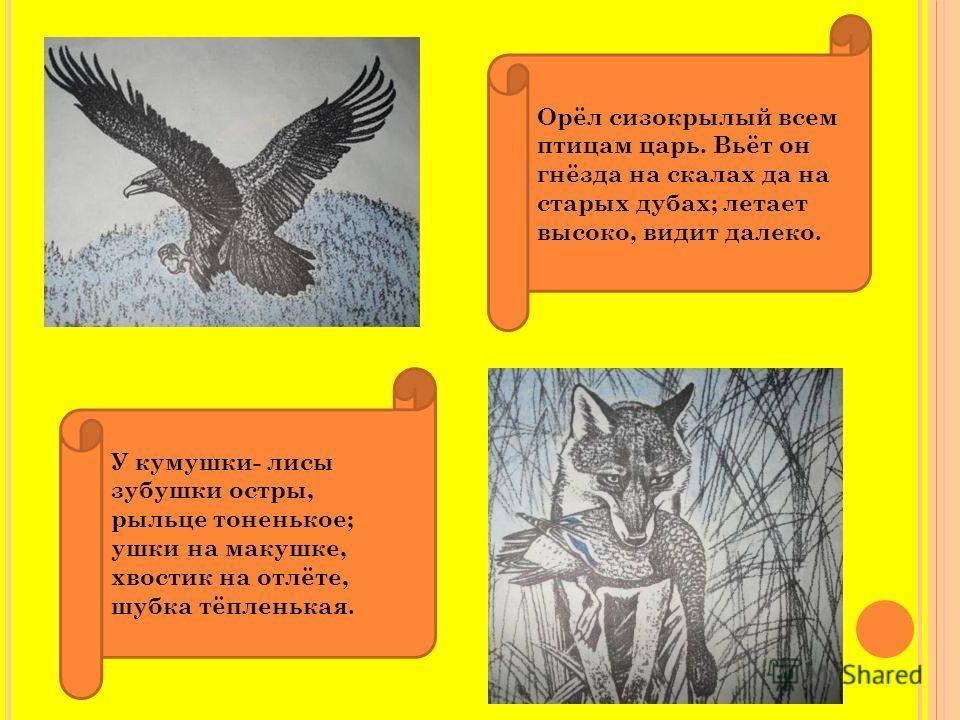 Орёл сизокрылый всем птицам царь. Вьёт он гнёзда на скалах да на старых дубах; летает высоко, видит далеко. У кумушки- лисы зубушки остры, рыльце тоненькое; ушки на макушке, хвостик на отлёте, шубка тёпленькая.