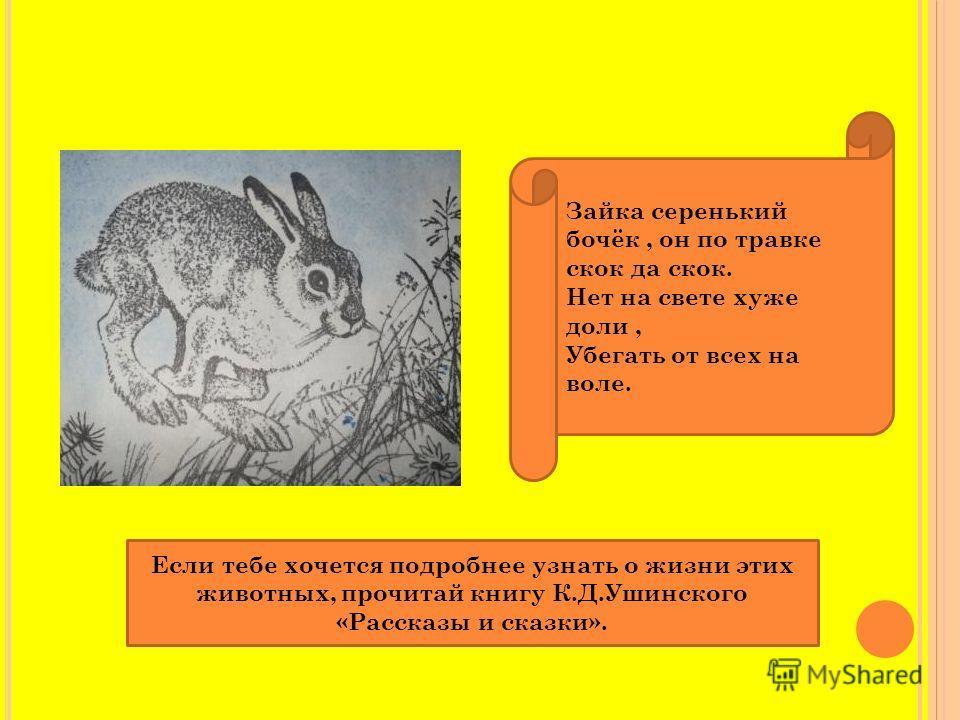 Зайка серенький бочёк, он по травке скок да скок. Нет на свете хуже доли, Убегать от всех на воле. Если тебе хочется подробнее узнать о жизни этих животных, прочитай книгу К.Д.Ушинского «Рассказы и сказки».