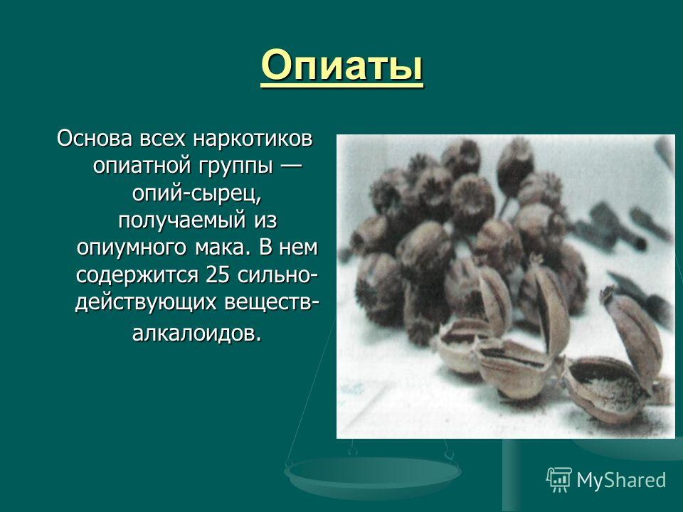 Опиаты Основа всех наркотиков опиатной группы опий-сырец, получаемый из опиумного мака. В нем содержится 25 сильно действующих веществ- алкалоидов.