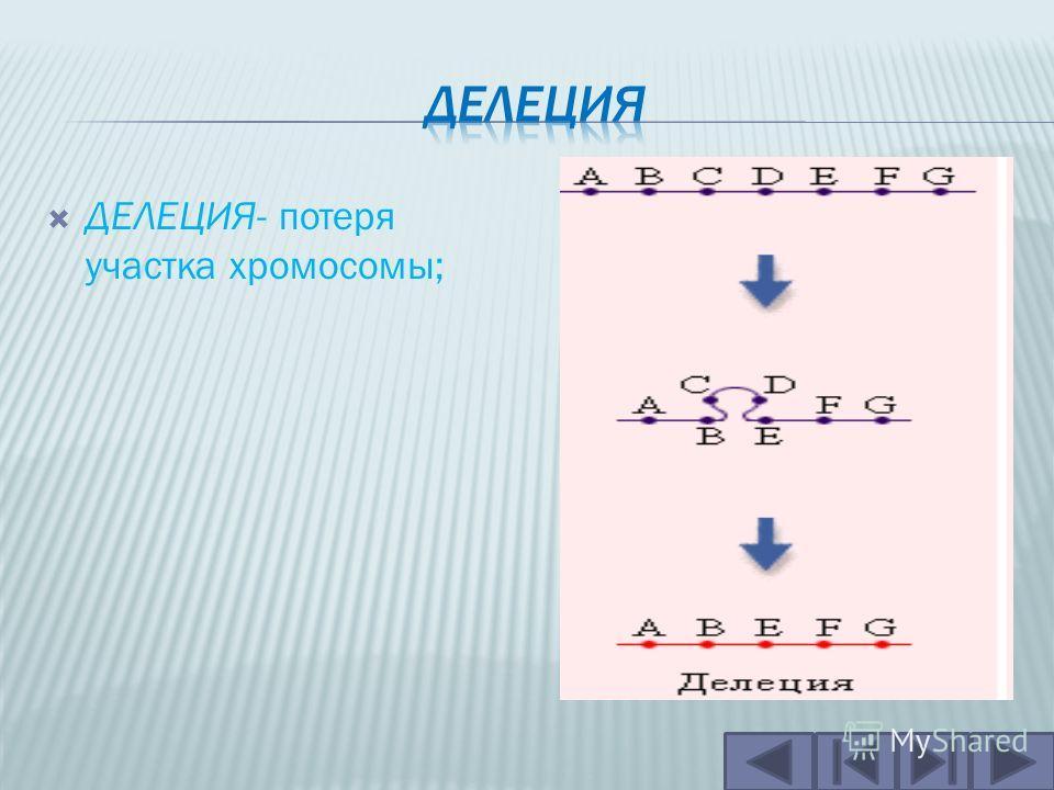 ТРАНСЛОКАЦИЯ- обмен участками негомологичных хромосом и слияние двух негомологичных хромосом в одну.