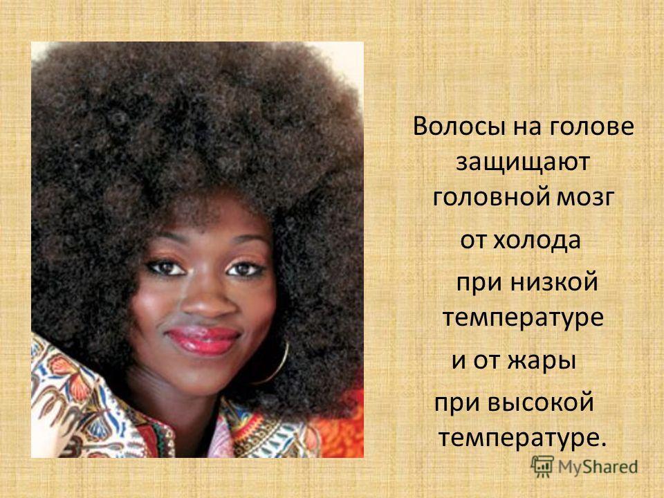 Волосы на голове защищают головной мозг от холода при низкой температуре и от жары при высокой температуре.