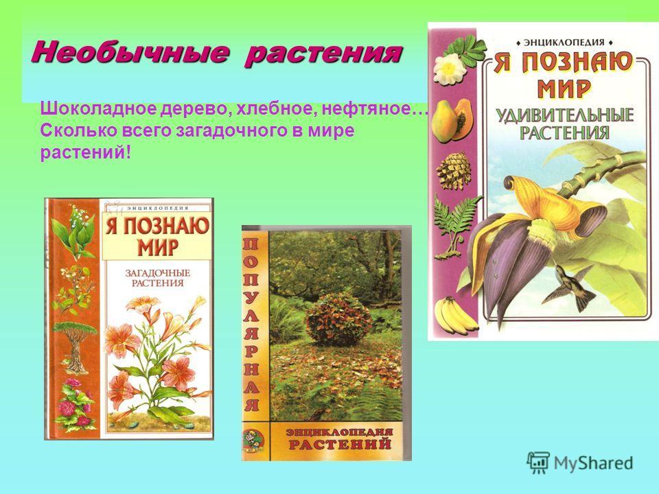 Необычные растения Шоколадное дерево, хлебное, нефтяное… Сколько всего загадочного в мире растений!