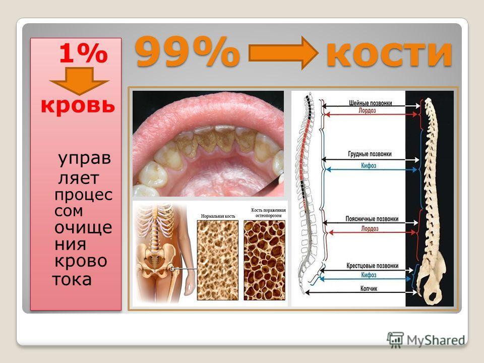 99% кости 1% кровь управ ляет процес сом очище ния крово тока 1% кровь управ ляет процес сом очище ния крово тока