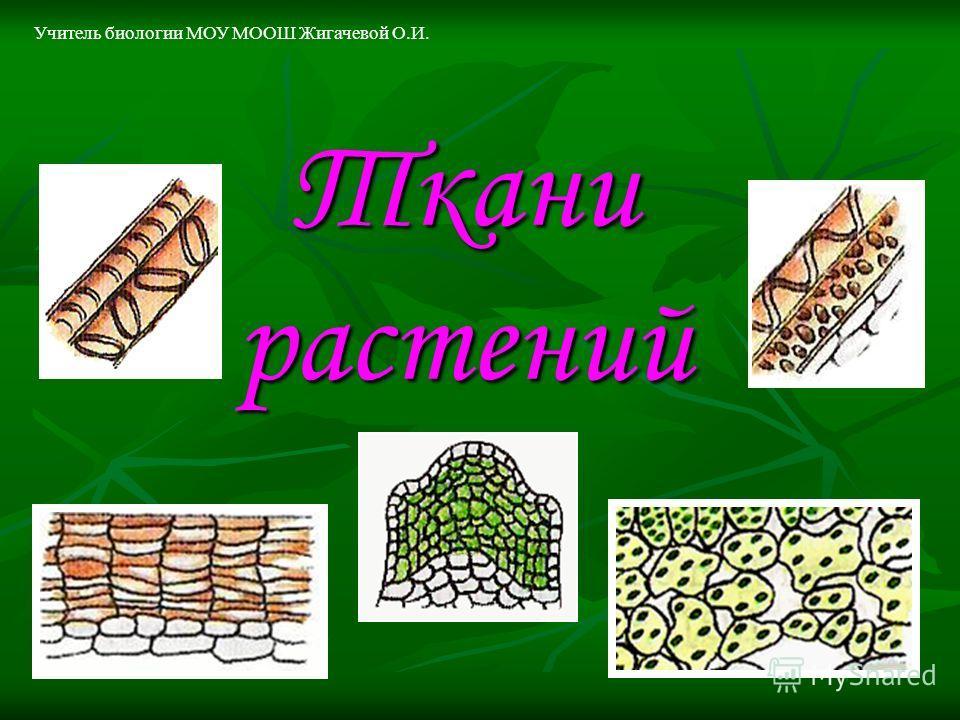 Ткани растений Учитель биологии МОУ МООШ Жигачевой О.И.