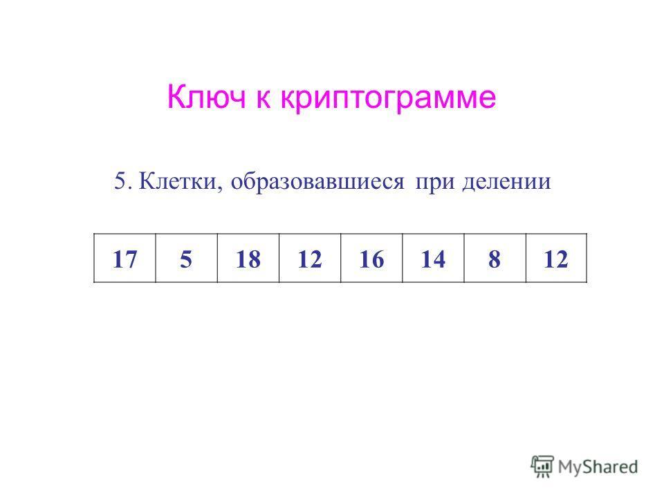 Ключ к криптограмме 5.Клетки, образовавшиеся при делении 17518121614812