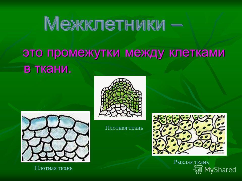 это промежутки между клетками в ткани. Плотная ткань Рыхлая ткань