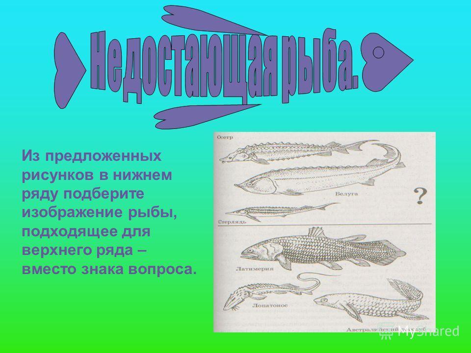 Из предложенных рисунков в нижнем ряду подберите изображение рыбы, подходящее для верхнего ряда – вместо знака вопроса.