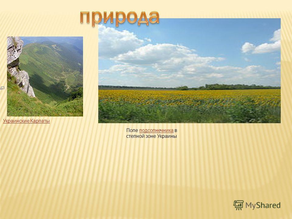 Украинские Карпаты Поле подсолнечника в степной зоне Украиныподсолнечника