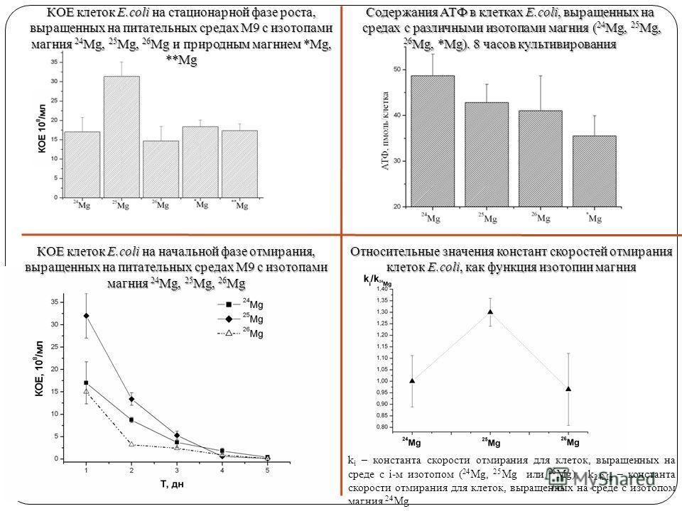 Содержания АТФ в клетках E.coli, выращенных на средах с различными изотопами магния ( 24 Mg, 25 Mg, 26 Mg, *Mg). 8 часов культивирования КОЕ клеток E.coli на стационарной фазе роста, выращенных на питательных средах М9 с изотопами магния 24 Mg, 25 Mg