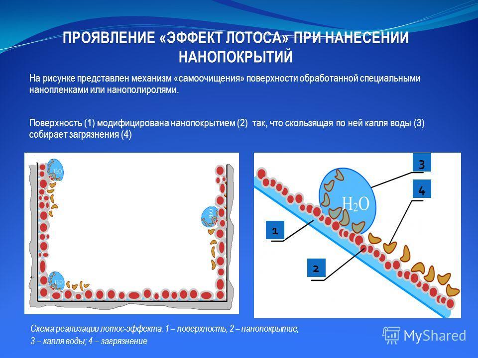 ПРОЯВЛЕНИЕ «ЭФФЕКТ ЛОТОСА» ПРИ НАНЕСЕНИИ НАНОПОКРЫТИЙ На рисунке представлен механизм «самоочищения» поверхности обработанной специальными нанопленками или нанополиролями. Поверхность (1) модифицирована нанопокрытием (2) так, что скользящая по ней ка