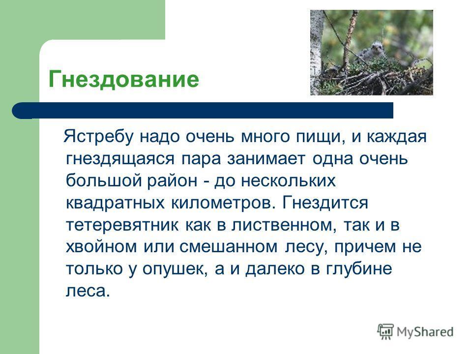 Гнездование Ястребу надо очень много пищи, и каждая гнездящаяся пара занимает одна очень большой район - до нескольких квадратных километров. Гнездится тетеревятник как в лиственном, так и в хвойном или смешанном лесу, причем не только у опушек, а и