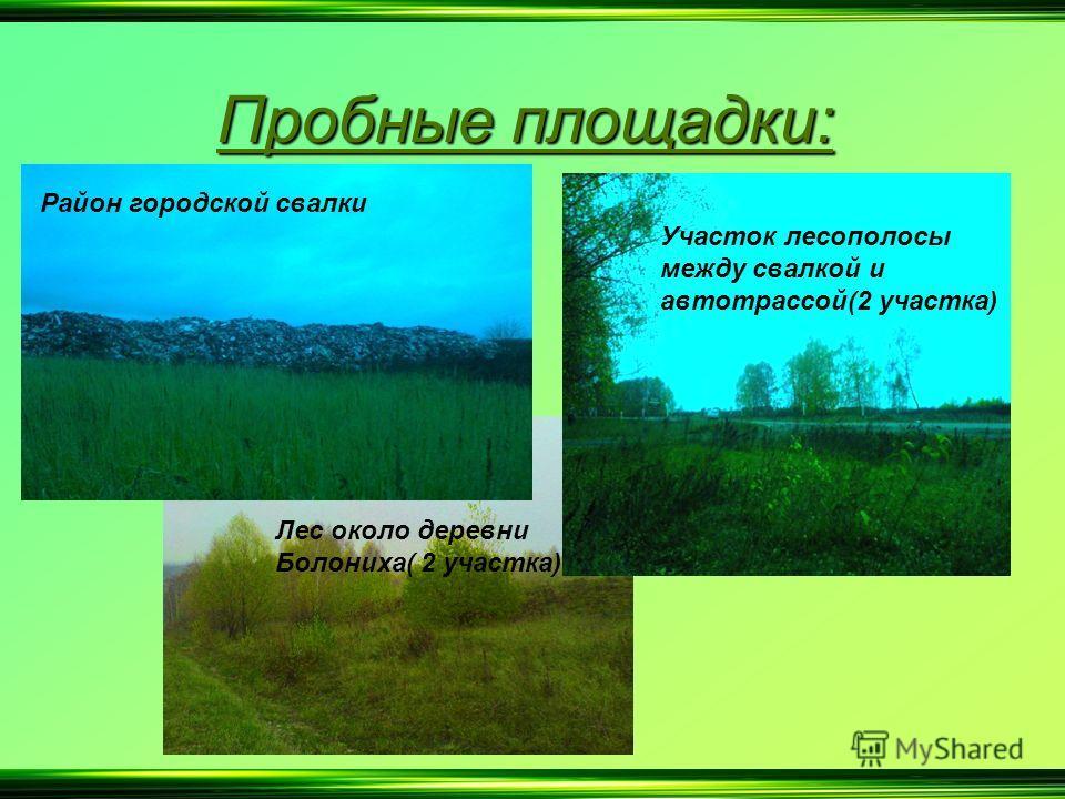 Пробные площадки: Район городской свалки Лес около деревни Болониха( 2 участка) Участок лесополосы между свалкой и автотрассой(2 участка)
