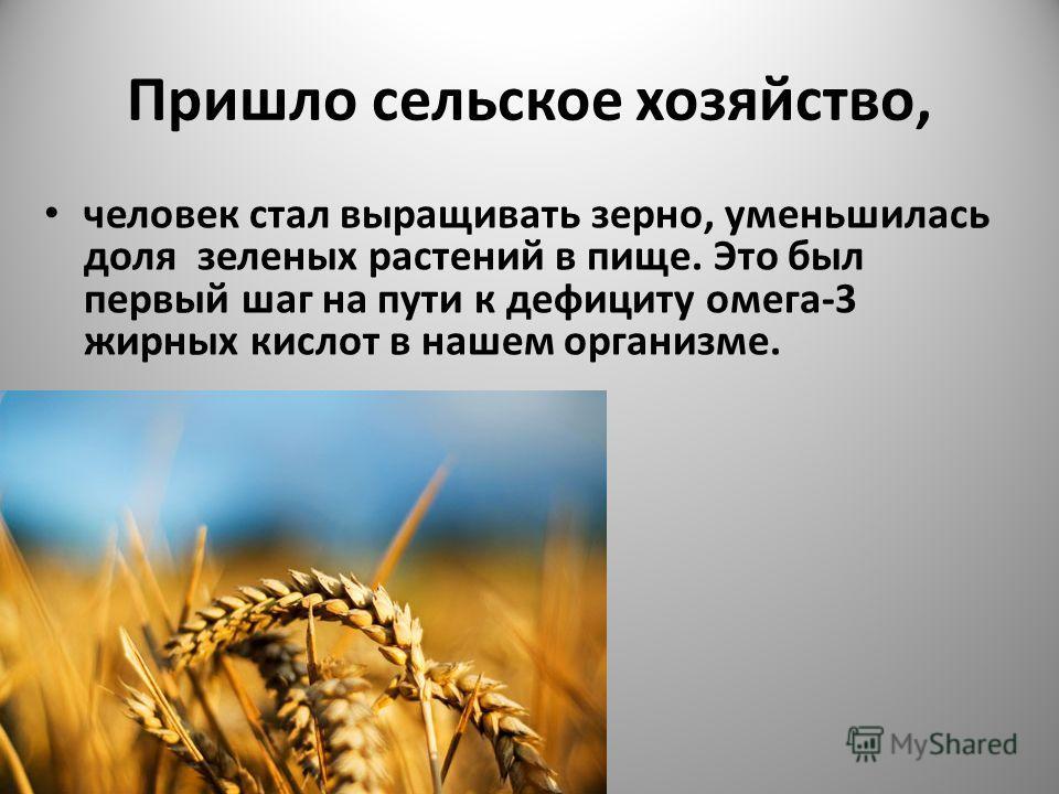 Пришло сельское хозяйство, человек стал выращивать зерно, уменьшилась доля зеленых растений в пище. Это был первый шаг на пути к дефициту омега-3 жирных кислот в нашем организме.