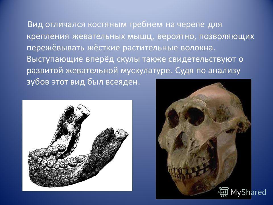 Вид отличался костяным гребнем на черепе для крепления жевательных мышц, вероятно, позволяющих пережёвывать жёсткие растительные волокна. Выступающие вперёд скулы также свидетельствуют о развитой жевательной мускулатуре. Судя по анализу зубов этот ви