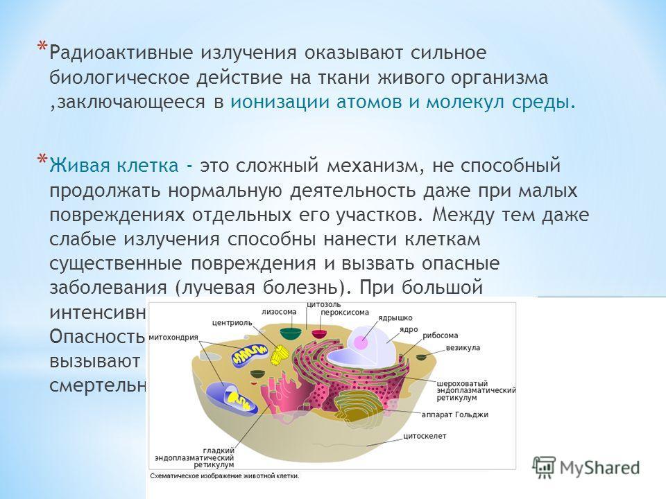 * Радиоактивные излучения оказывают сильное биологическое действие на ткани живого организма,заключающееся в ионизации атомов и молекул среды. * Живая клетка - это сложный механизм, не способный продолжать нормальную деятельность даже при малых повре