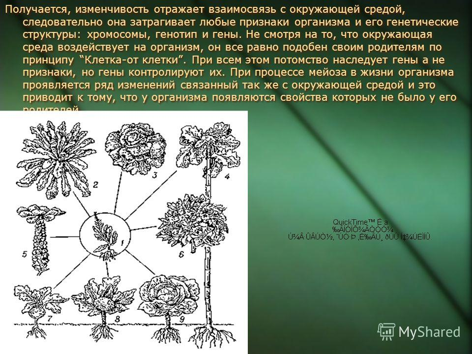 Получается, изменчивость отражает взаимосвязь с окружающей средой, следовательно она затрагивает любые признаки организма и его генетические структуры: хромосомы, генотип и гены. Не смотря на то, что окружающая среда воздействует на организм, он все