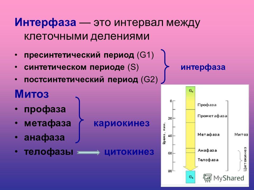 Размножение организмов Бесполое Соматические клетки Представлены двумя гомологичными хромосомами Диплоидный набор хромосом (2п) Клетки делятся митозом. Половое Половые клетки От каждой пары гомологичных хромосом имеется только одна Гаплоидный набор х