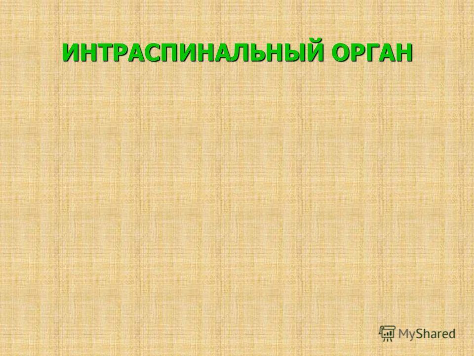 ИНТРАСПИНАЛЬНЫЙ ОРГАН