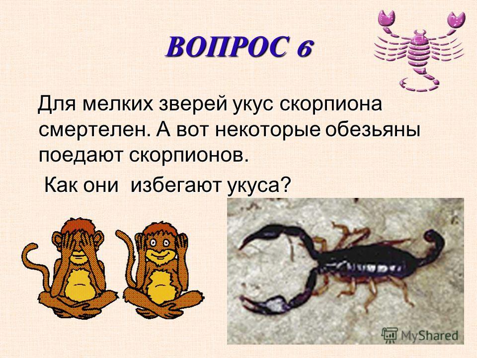 ВОПРОС 6 Для мелких зверей укус скорпиона смертелен. А вот некоторые обезьяны поедают скорпионов. Для мелких зверей укус скорпиона смертелен. А вот некоторые обезьяны поедают скорпионов. Как они избегают укуса? Как они избегают укуса?