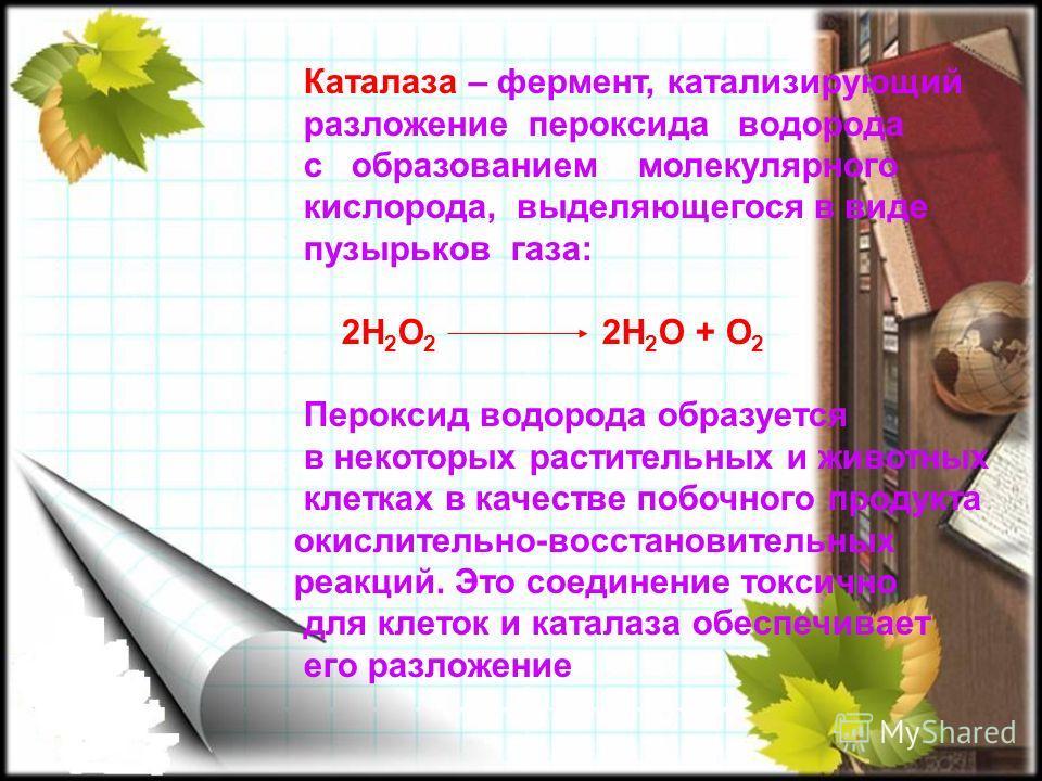 Каталаза – фермент, катализирующий разложение пероксида водорода с образованием молекулярного кислорода, выделяющегося в виде пузырьков газа: 2Н 2 О 2 2Н 2 О + О 2 Пероксид водорода образуется в некоторых растительных и животных клетках в качестве по