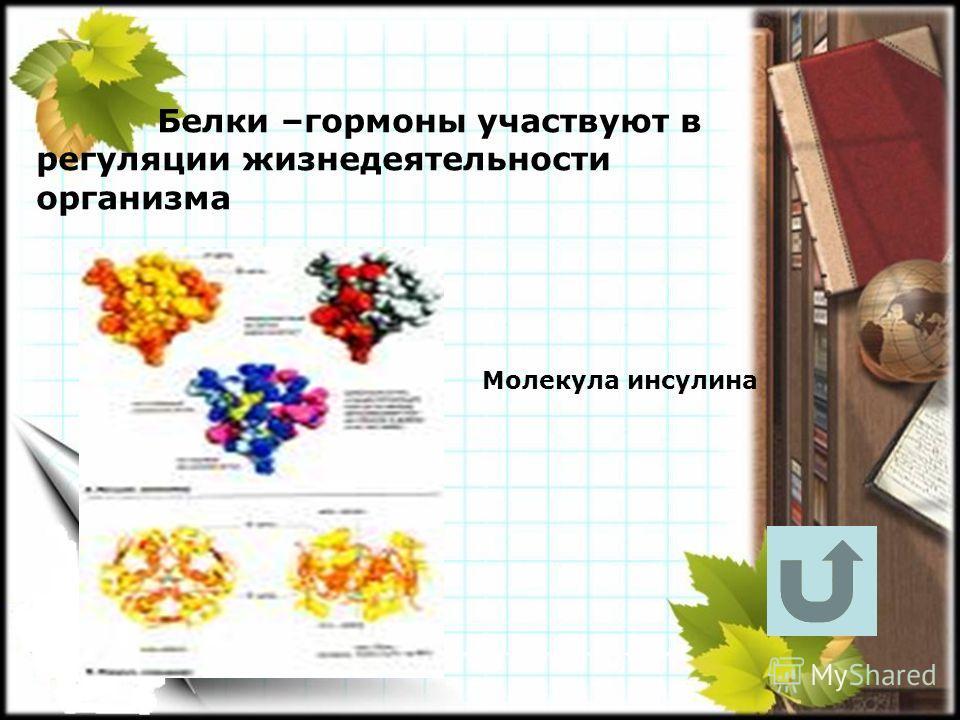 Белки –гормоны участвуют в регуляции жизнедеятельности организма Молекула инсулина
