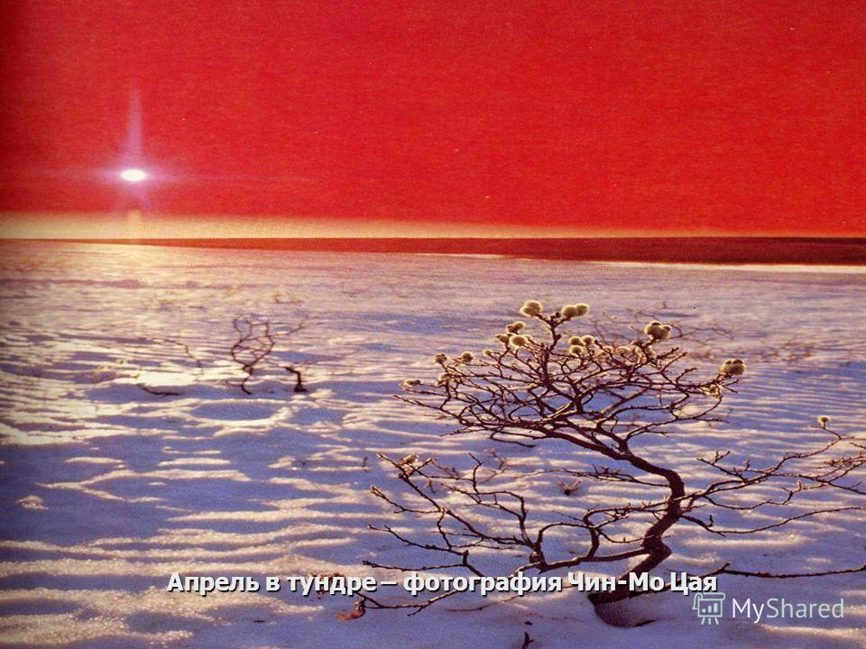 Апрель в тундре – фотография Чин-Мо Цая