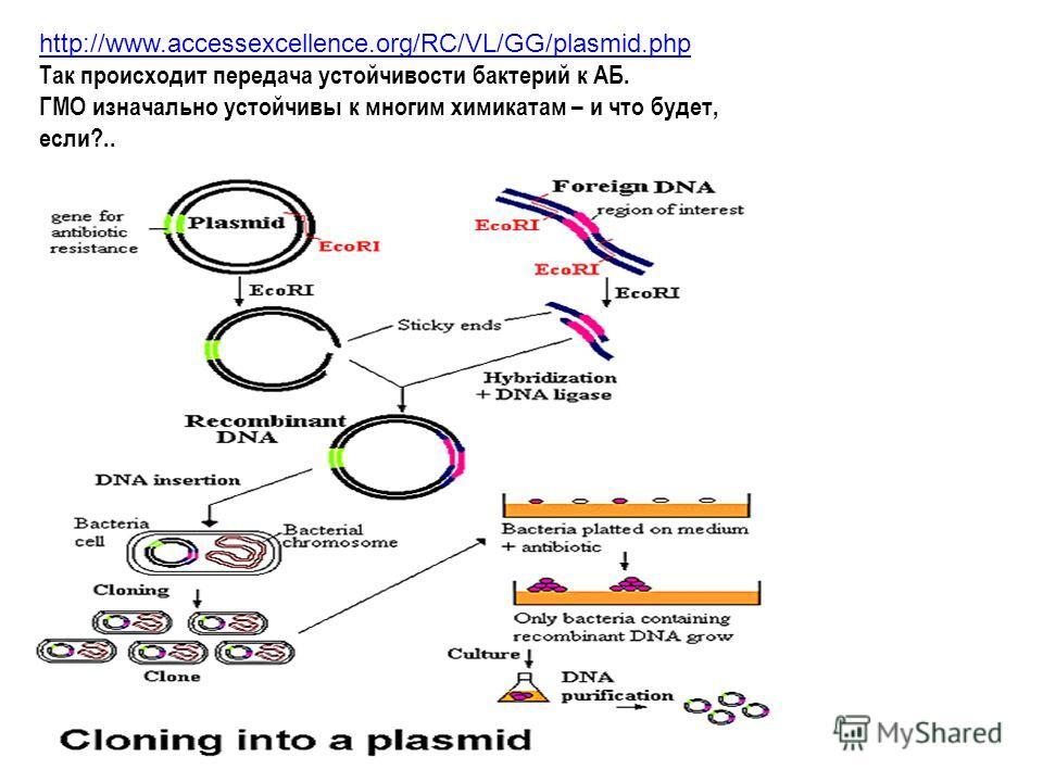 http://www.accessexcellence.org/RC/VL/GG/plasmid.php Так происходит передача устойчивости бактерий к АБ. ГМО изначально устойчивы к многим химикатам – и что будет, если?..