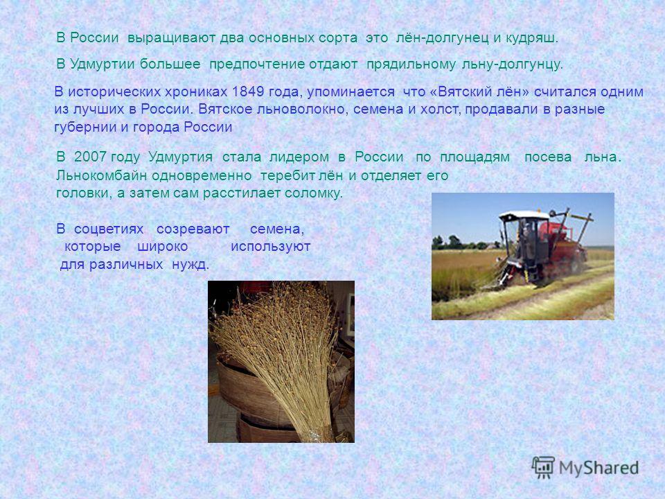В России выращивают два основных сорта это лён-долгунец и кудряш. В Удмуртии большее предпочтение отдают прядильному льну-долгунцу. В 2007 году Удмуртия стала лидером в России по площадям посева льна. Льнокомбайн одновременно теребит лён и отделяет е