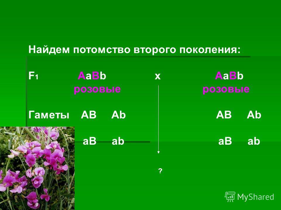 Найдем потомство второго поколения: F 1 AaBb х AaBb розовые розовые Гаметы AB Ab AB Ab aB ab aB ab ?