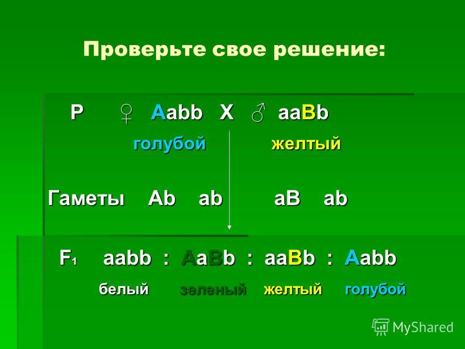 Проверьте свое решение: Р Aabb Х aaBb Р Aabb Х aaBb голубой желтый голубой желтый Гаметы Ab ab aB ab F 1 aabb : AaBb : aaBb : Aabb F 1 aabb : AaBb : aaBb : Aabb белый зеленый желтый голубой белый зеленый желтый голубой