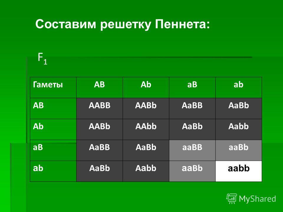 F1F1 ГаметыАВAbaBab ABAABBAABbAaBBAaBb AbAABbAAbbAaBbAabb aBAaBBAaBbaaBBaaBb ababAaBbA a bb aa Bb aabb Составим решетку Пеннета: