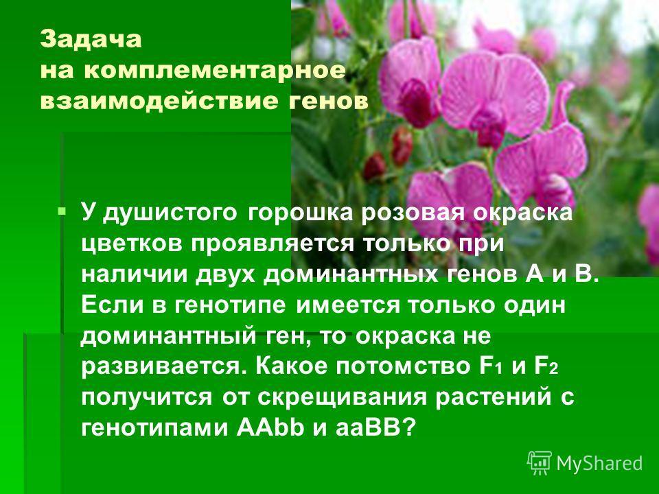 Задача на комплементарное взаимодействие генов У душистого горошка розовая окраска цветков проявляется только при наличии двух доминантных генов А и В. Если в генотипе имеется только один доминантный ген, то окраска не развивается. Какое потомство F