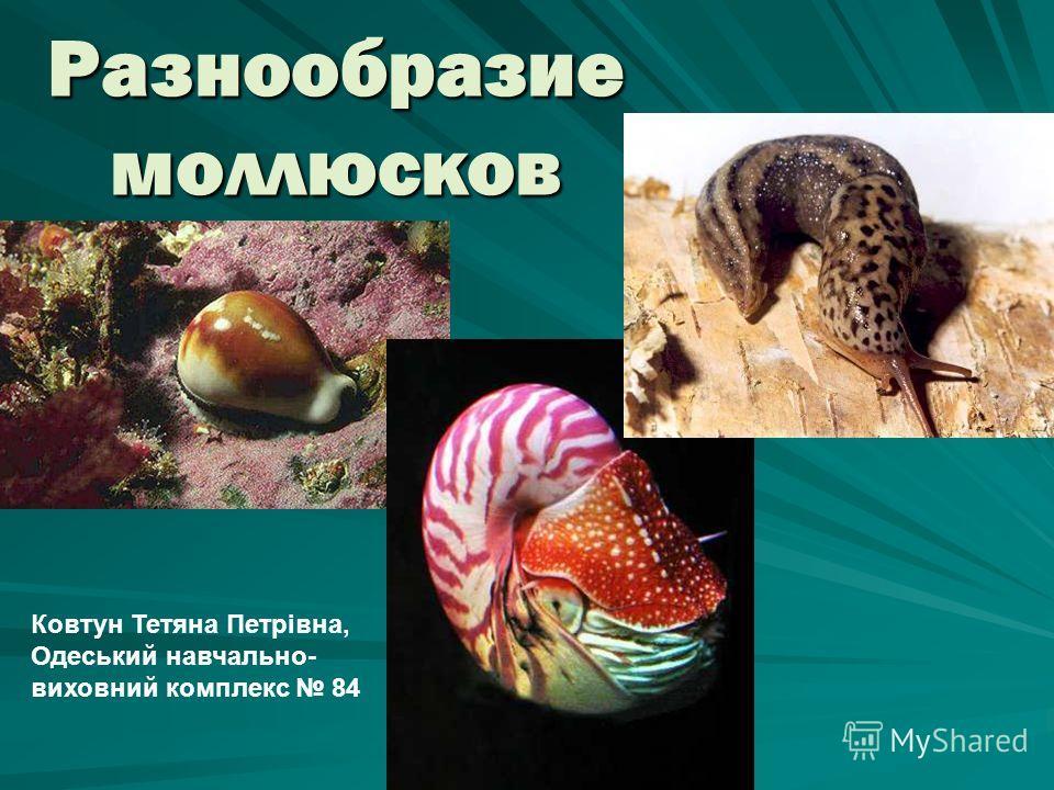 Разнообразие моллюсков Ковтун Тетяна Петрівна, Одеський навчально- виховний комплекс 84