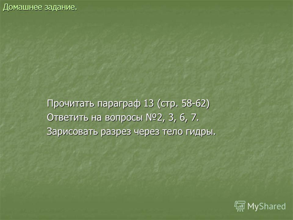 Домашнее задание. Прочитать параграф 13 (стр. 58-62) Ответить на вопросы 2, 3, 6, 7. Зарисовать разрез через тело гидры.