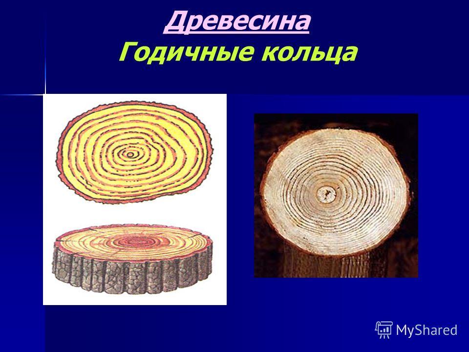 Древесина Годичные кольца