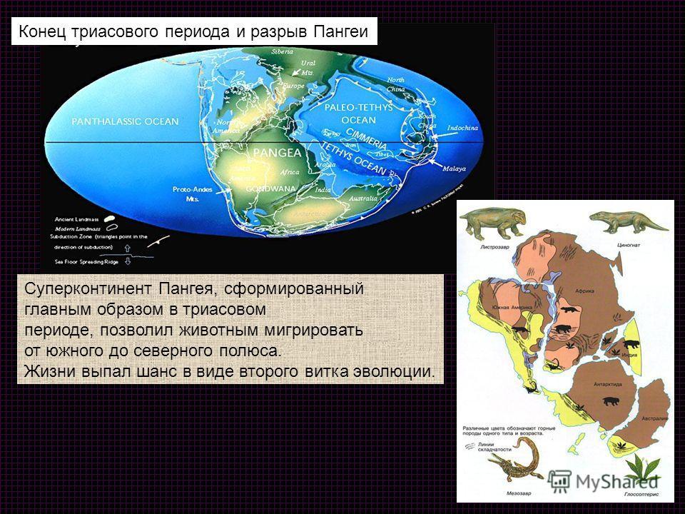 Конец триасового периода и разрыв Пангеи Суперконтинент Пангея, сформированный главным образом в триасовом периоде, позволил животным мигрировать от южного до северного полюса. Жизни выпал шанс в виде второго витка эволюции.