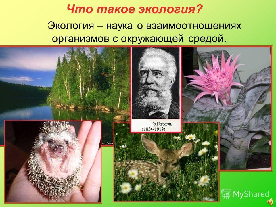 Что такое экология? Экология – наука о взаимоотношениях организмов с окружающей средой.