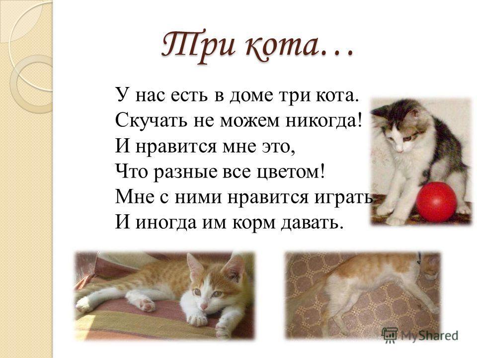 Три кота… У нас есть в доме три кота. Скучать не можем никогда! И нравится мне это, Что разные все цветом! Мне с ними нравится играть И иногда им корм давать.
