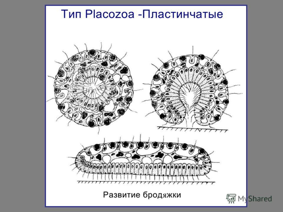 На тему многоклеточные животные