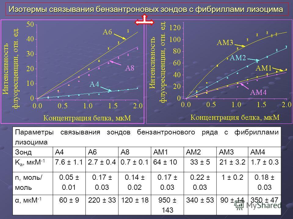 Изотермы связывания бензантроновых зондов с фибриллами лизоцима Параметры связывания зондов бензантронового ряда с фибриллами лизоцима ЗондA4A6A8AM1AM2AM3AM4 K a, мкM -1 7.6 ± 1.12.7 ± 0.40.7 ± 0.164 ± 1033 ± 521 ± 3.21.7 ± 0.3 n, моль/ моль 0.05 ± 0