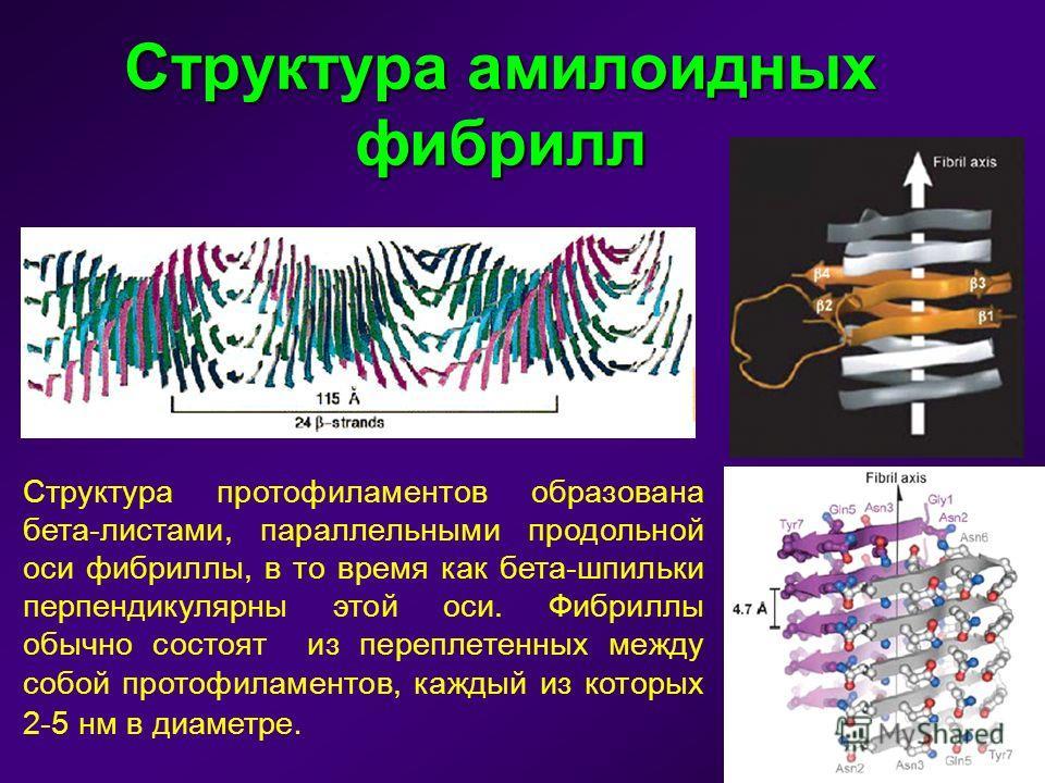 Структура амилоидных фибрилл Структура протофиламентов образована бета-листами, параллельными продольной оси фибриллы, в то время как бета-шпильки перпендикулярны этой оси. Фибриллы обычно состоят из переплетенных между собой протофиламентов, каждый
