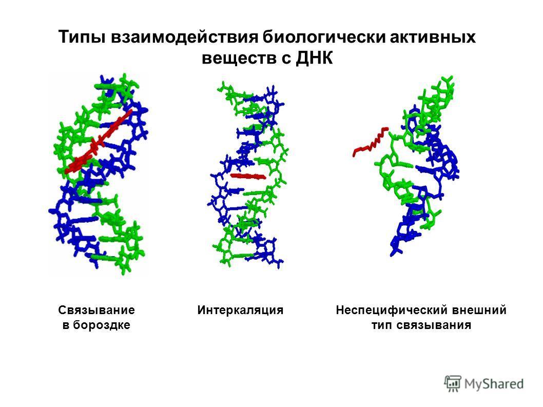 Типы взаимодействия биологически активных веществ с ДНК Связывание в бороздке ИнтеркаляцияНеспецифический внешний тип связывания