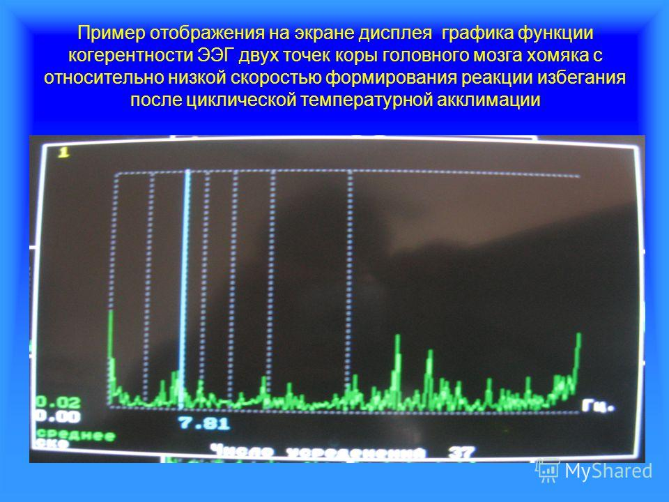 Пример отображения на экране дисплея графика функции когерентности ЭЭГ двух точек коры головного мозга хомяка с относительно низкой скоростью формирования реакции избегания после циклической температурной акклимации