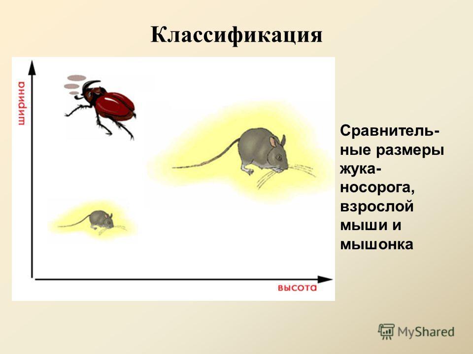 Классификация Сравнитель- ные размеры жука- носорога, взрослой мыши и мышонка