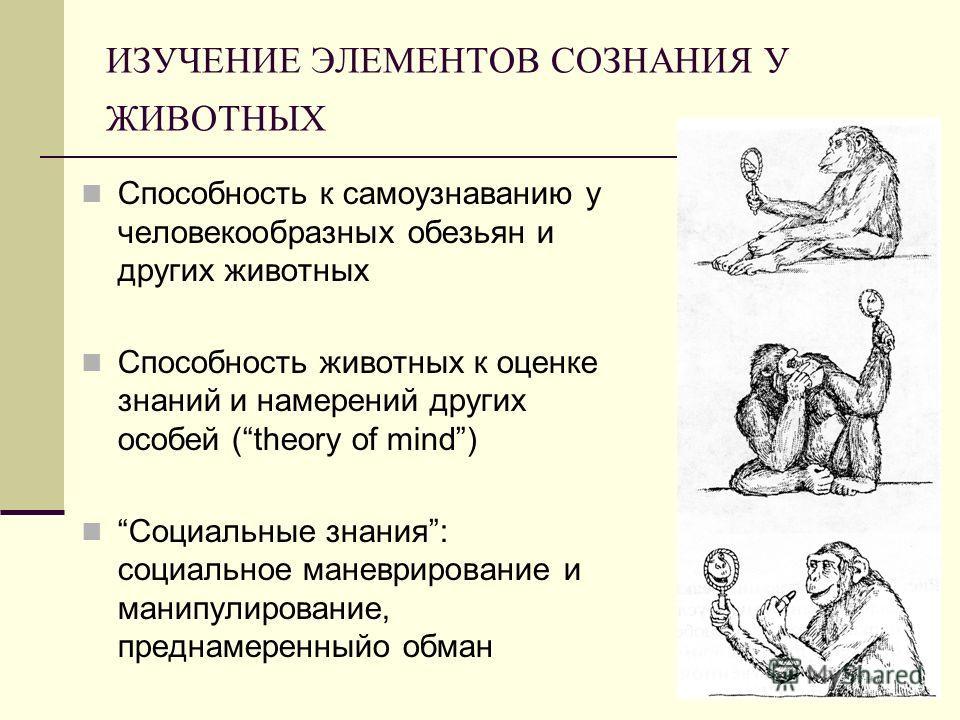 ИЗУЧЕНИЕ ЭЛЕМЕНТОВ СОЗНАНИЯ У ЖИВОТНЫХ Способность к самоузнаванию у человекообразных обезьян и других животных Способность животных к оценке знаний и намерений других особей (theory of mind) Социальные знания: социальное маневрирование и манипулиров